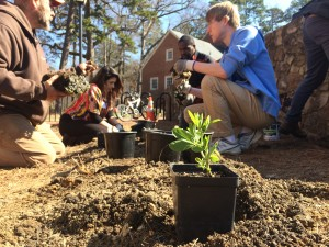 UNC's campus is one of iconic beauty, but it is also becoming a model for more educational landscapes through the Edible Campus project. (Photo by Jessica Porter/Carolina Connection)